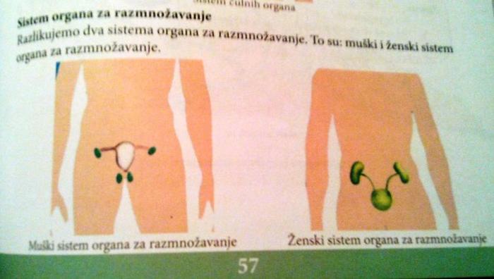 Sexualno obrazovanje u skolama